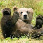 """Irány a """"Brummogókhoz"""" az Állatkertbe! – hétvégén Mackófesztivál"""