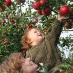Az elvégzett munka öröme – Adjunk feladatot a gyereknek!