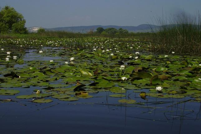 Magyarország rejtett természeti csodái 2. – Bodrogzug