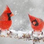 Ingyenesen letölthető társasjáték népszerűsíti a madárvilágot