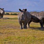 A biológiai sokféleség nemzetközi napja