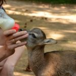 Óvodai programot indított a Budakeszi Vadaspark