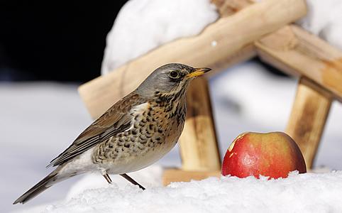 Tippek, trükkök téli madáretetéshez