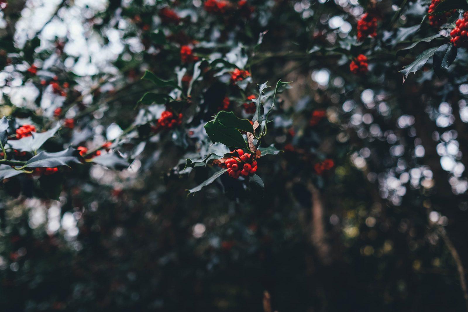 Lehet jó a karácsony? Egyszülős családok ünnepe