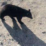 A medve árnyéka – tavaszi időjósló hiedelmek