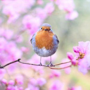 Miért olvassunk tavaszi verseket?