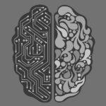 A férfi agy és a női agy