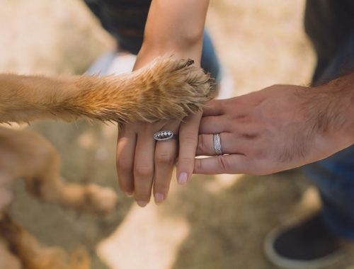 házaspár keze a kutyájuk mancsával