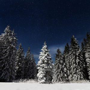 Bösze Balázs: Erdei karácsony