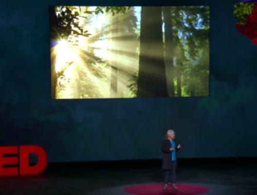 TED előadás