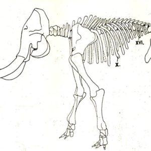 Figyelem, megjelent Pécsen egy mamut!