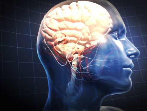 fotó egy agyról