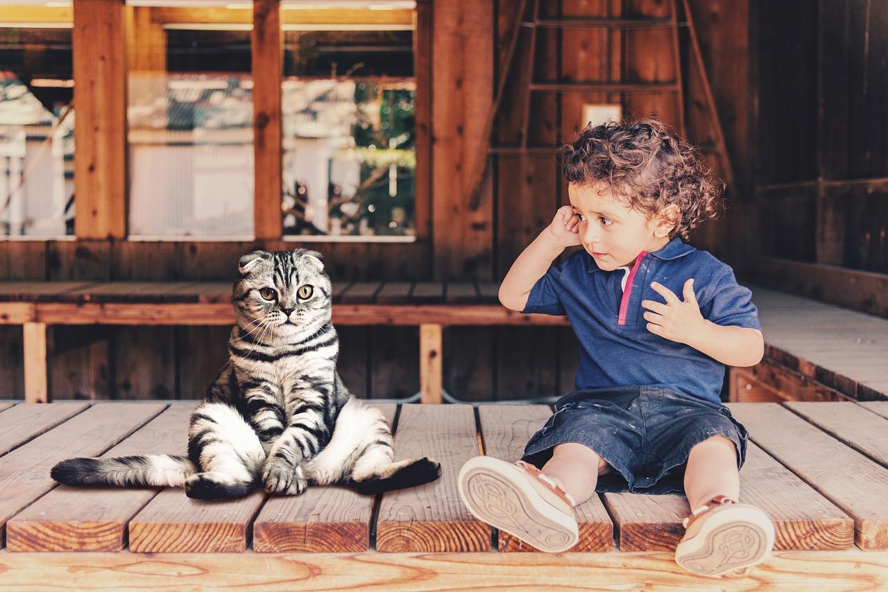 kisfiú ül egy macskával a teraszon