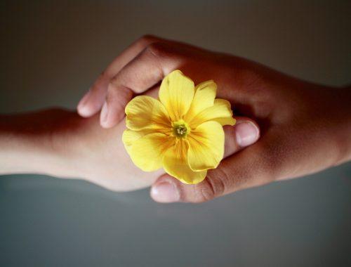 két kézzel tartanak egy sárga virágot