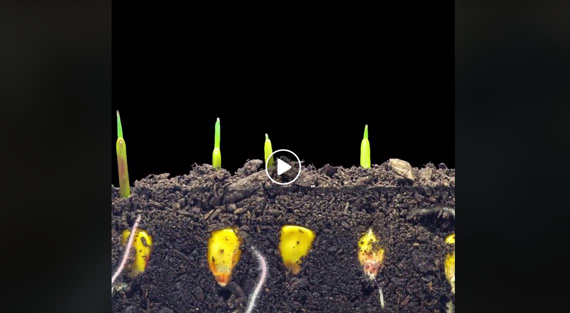 növények a földben