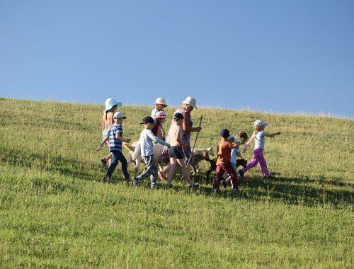 gyerekek kecskéket terelnek a mezőn