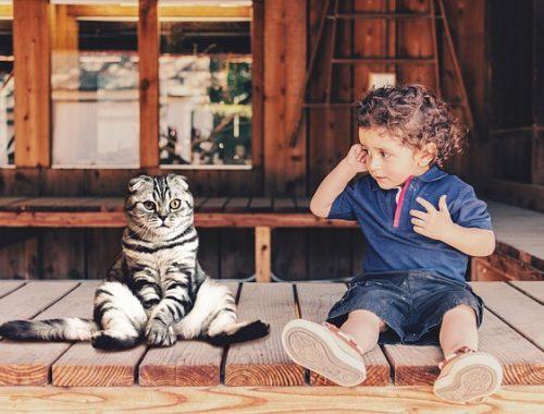kisfiú ül a verandán egy macskával