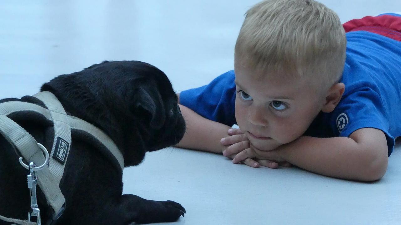 kisfiú és kutya szembenéznek egymással