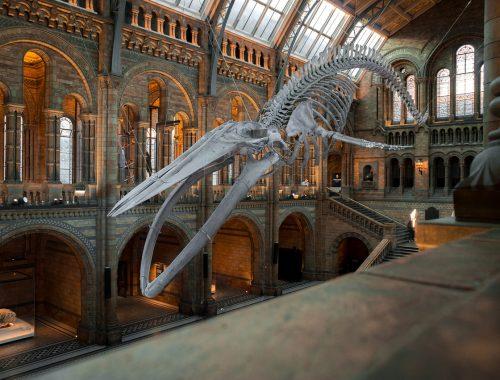 bálna csontváz
