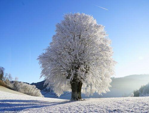 Deres fa a téli tájban.